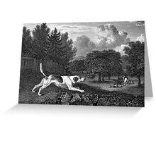 Harrier Dog Old Art Greeting Card