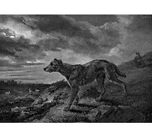 Lurcher Dogs Vintage Drawing Photographic Print