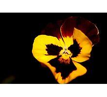 yellow flower Photographic Print
