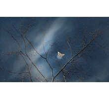 Cottonwood -  Late Evening, Early Spring  Photographic Print