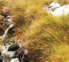 Stream in Kylemore by Jeff Stanford