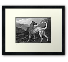 Irish Greyhound Dog Framed Print