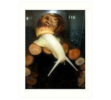 Rocket the Albino Giant African Land Snail Art Print