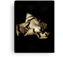 Dried  Flowers  Series -Jasmin- Canvas Print