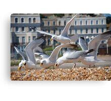 Scavenging Herring Gulls Canvas Print