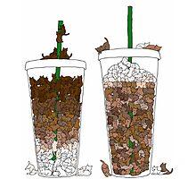 Starbucks Kittens! Photographic Print