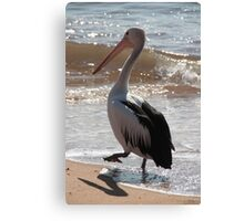 Pelican, taking it step by step Canvas Print