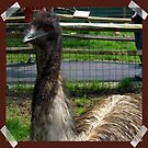 Emu At the Petting Zoo?! by teresa731