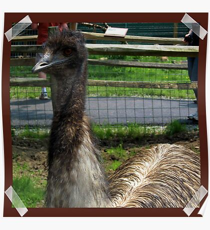 Emu At the Petting Zoo?! Poster