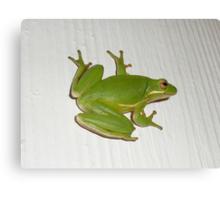 Green Tree Frog - Hyla cinerea Canvas Print