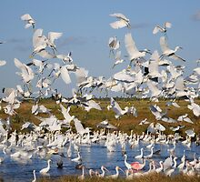 Frenzied Flock of Wading Birds by Tom Dunkerton
