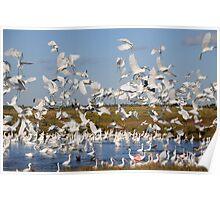Frenzied Flock of Wading Birds Poster