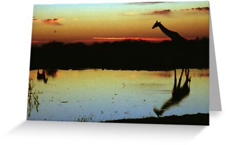 Giraffe at Sunset, Etosha, Namibia  by Carole-Anne