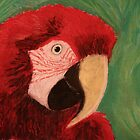 The Green Winged Macaw by Rebecca Lee Means