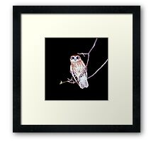 Barking Owl at Night, Northern Territory, Australia  Framed Print