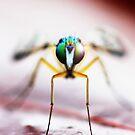 bug by NicoleConrau