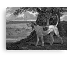 Staghound Black And White Art Canvas Print