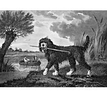 Waterdog Vintage Illustration Photographic Print