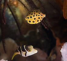 Fish friends by Fiona Ayerst
