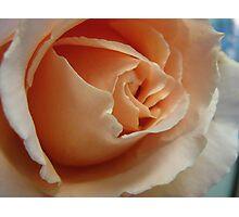 Rose@3 Photographic Print