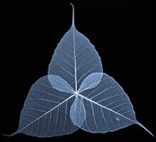 Leaf Vertical Blue by Chris Paul