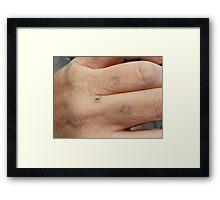 Greenfly. Framed Print