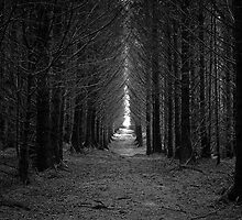 Langamull Forest 01 - Sitka Spruce Avenue by ExclusivelyMono