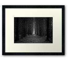 Langamull Forest 01 - Sitka Spruce Avenue Framed Print