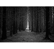 Langamull Forest 01 - Sitka Spruce Avenue Photographic Print