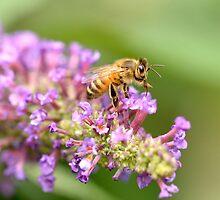 Bee-utiful  by Simon Pattinson