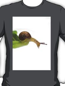 Baby Snail T-Shirt