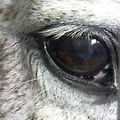 The Gentle Eye of a Beloved Champ. by Meg Hart
