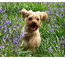 hamish in bluebells Photographic Print