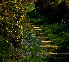 Blue bell & gorse lined steps by moor2sea