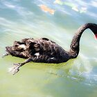 Swanning Around by Sheaney