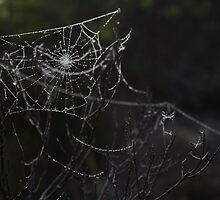 Spiderweb 2 by BecOversby