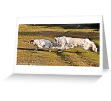 White German Shepard &Terrier Greeting Card