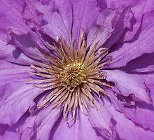 Clematis Closeup by James Brotherton
