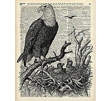 Eagle and its nest over encyclopedia page Photographic Print