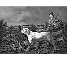 Setter Dog Illustration Photographic Print