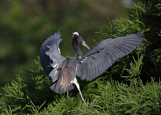 Flaps Down For Landing! by Gail Falcon