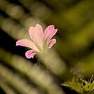 Geranium  by Mike  Waldron