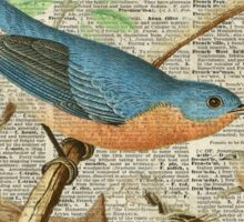 Eastern Blue Birds Canary Over Old Book Page  Sticker