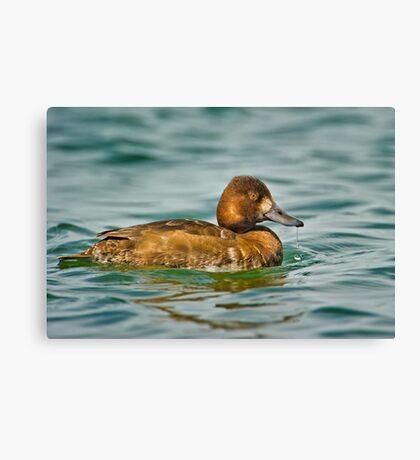 Dribbling Duck  Canvas Print