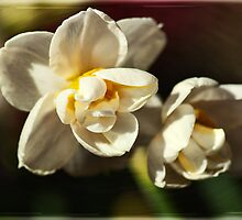 Dwarf Narcissus by Roy Griffiths