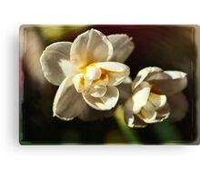 Dwarf Narcissus Canvas Print