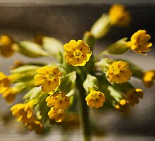 Cowslip by Roy Griffiths