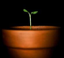 Grow by hanloufoley