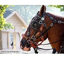 Draft horses Photographic Print