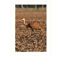 Sandhill Crane in Field Art Print
